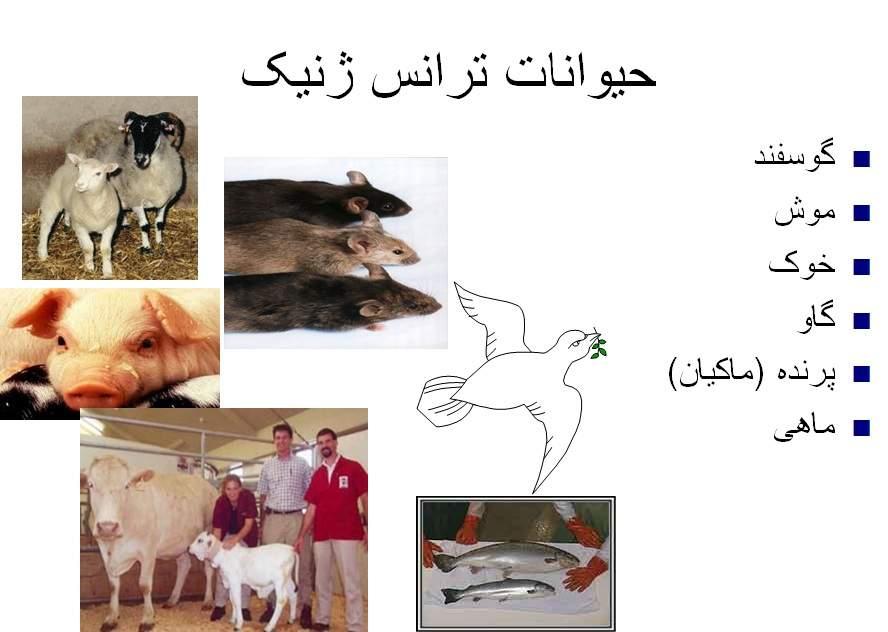 دانلود پاورپوینت حیوانات ترانس ژنیک